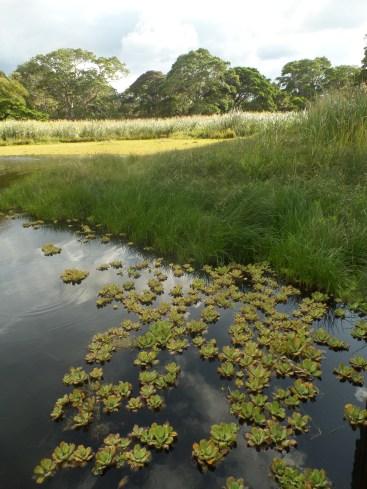 Flora de la laguna