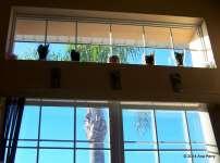 Framed Palm. Orlando Flordia