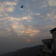 Coming home to roost, McLeod Ganj