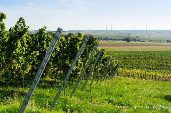 Rheinhessen - Bild Nr. 201310031923