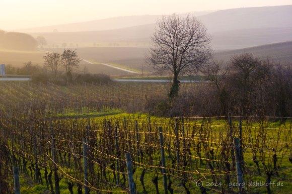 Rheinhessen: Abendstimmung im Winter - Bild Nr. 201401310922