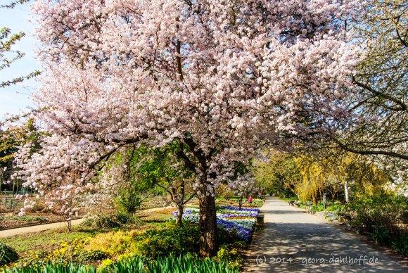 Botanischer Garten Uni Mainz - Bild Nr. 201404022691