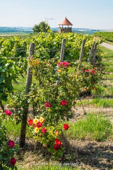 Wein und Rosen - Bild Nr. 201407190974