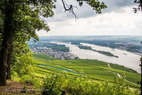 Ausblick vom Niederwald auf den Rhein Richtung Ingelheim - Bild Nr. 201408173483