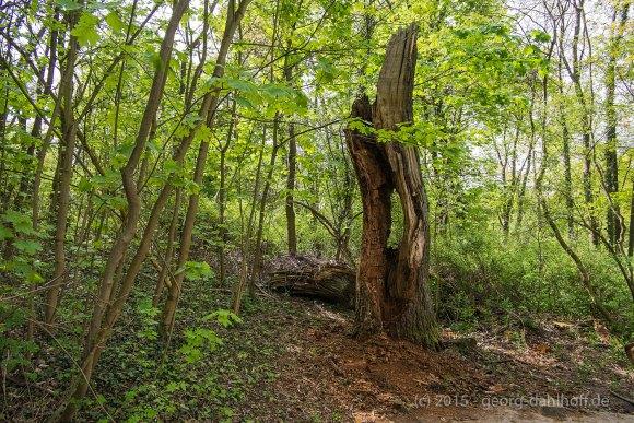 Rest eine alten Baumes - Bild Nr. 201504262326