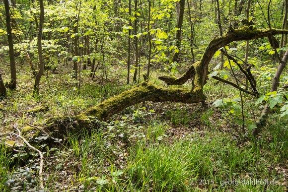 Altes Holz und frisches Grün - Bild Nr. 201504262337