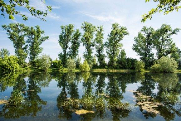 Teich des Angelsportvereins Oppenheim - Bild Nr. 201505144584