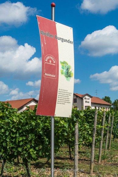 Bodenheimer Weinlehrpfad - Bild Nr. 201507264792