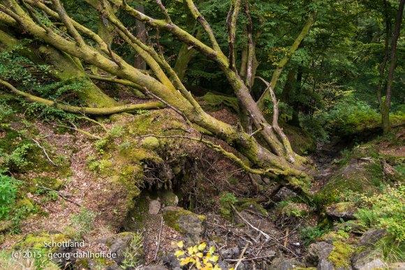 Urwüchsiger Wald - Bild Nr. 201510053320