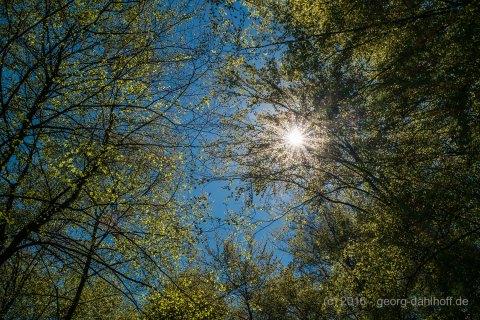 Im Wald am Eiswoog - Bild Nr. 201605084279