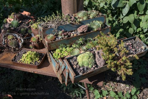 Tag der offenen Gärten 2016: Wahlheimer Hof - Bild Nr. 201609110773