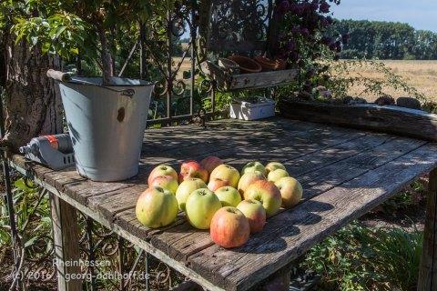 Tag der offenen Gärten 2016: Wahlheimer Hof - Bild Nr. 201609110793