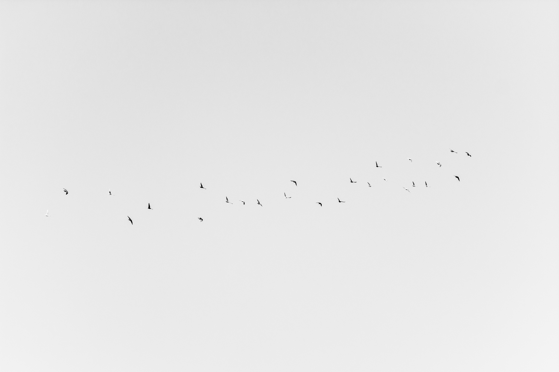 An image showing formations of feral pigeons in Tripoli, Lebanon. Part of the series Flight by George Burke