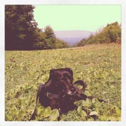 Smokey takes a break on a mountain-top rest area off I-80.