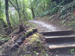What looks like a scene out of Hoyt Arboretum is actually a wooded path not far from busy Barbur Boulevard.