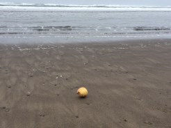 """Yellow onion on the beach."" Like a still-life painting."