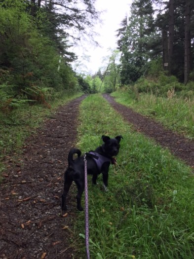 Charlotte explores the upper reaches of Eagle Lake Lane.
