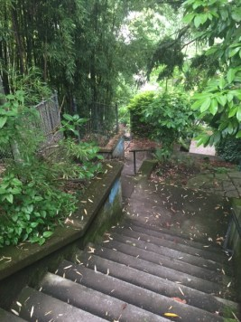 Yet another hidden staircase leading from NE Edgehill Place to Alameda Street.
