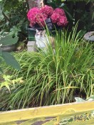 Can you spot the calico cat?