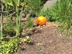 Pumpkins already?