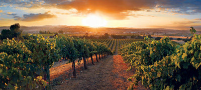 God's Wine Country