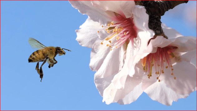 More Bad News for Bees