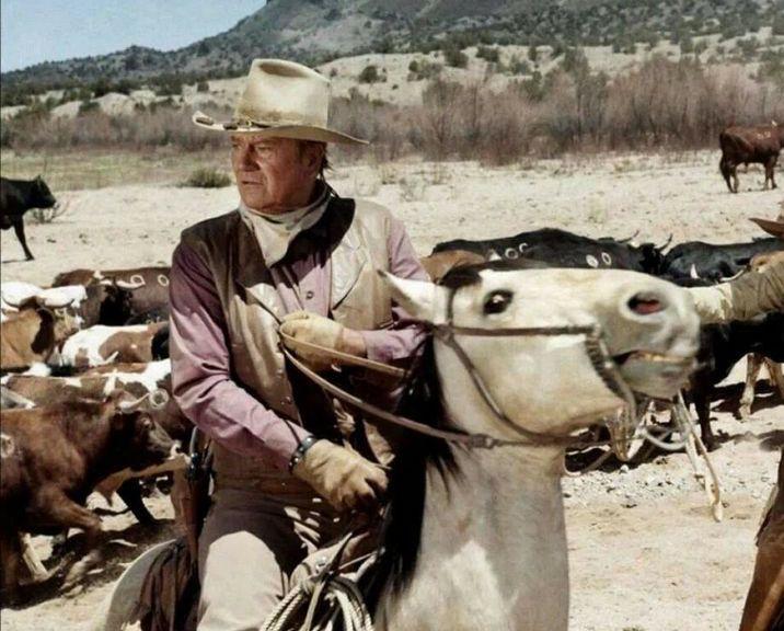 The Bundy Chronicles
