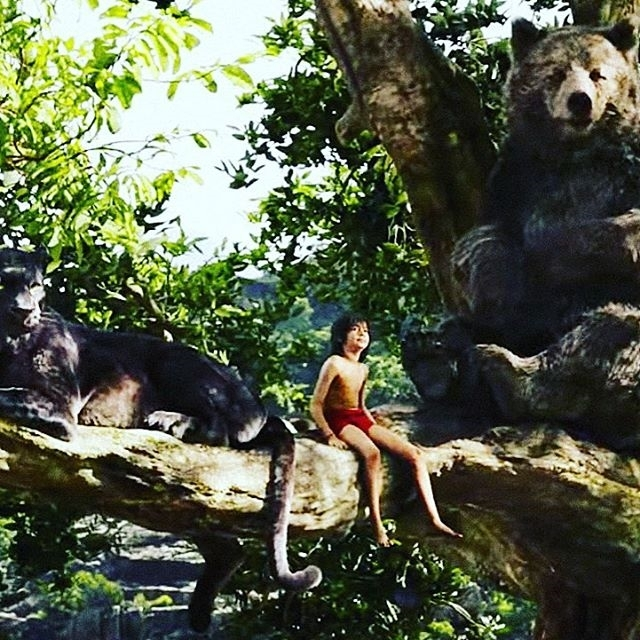 The jungle book was one the best movies this year! Honestly, the story was great and the visuals were stunning! 😀  Regram @dontfeedbasics J U N G L E  B O O K 🐍🐵🐻🐯 @bowermassey @misshazeyd #cinema #movie #bankholiday #chill #junglebook #mowgli #junglebookmovie #disney #dates #movies  #video  #film #films #videos #actor #actress #disney #dvd #amc #instamovies #star #moviestar #photooftheday #hollywood #goodmovie #instagood