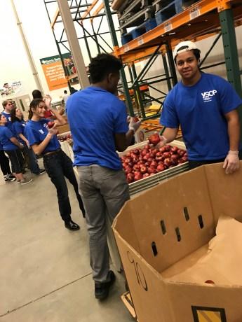Sorting apples at Capital Area Food Bank