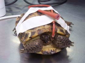 tortoise-with-e-tube-in