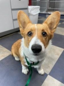 Dog Georgetown Veterinary Hospital