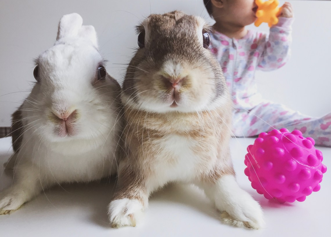 3 Lessons My Pet Bunnies Taught Me About Parenting