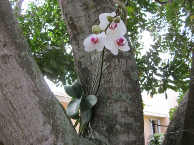 Foto: rv-orchidworks.com