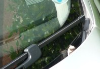 Hiding in the car