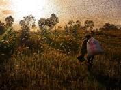 Into the Swarm