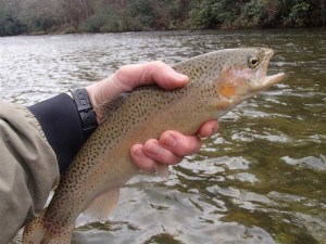 Caught New Year's Eve 2013 on the Chattooga River.