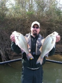 Jim Hakala with a couple white bass collected on the Coosa River.