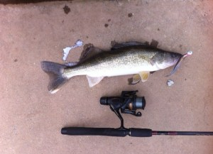 Walleye caught in the Chestatee River off Lake Lanier on March 21.