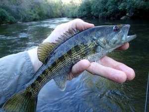 Taken on the Chattooga.