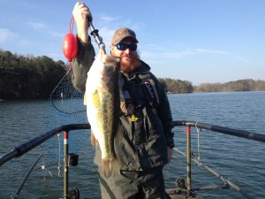 8.5-pound largemouth collected during sampling survey on Lanier.