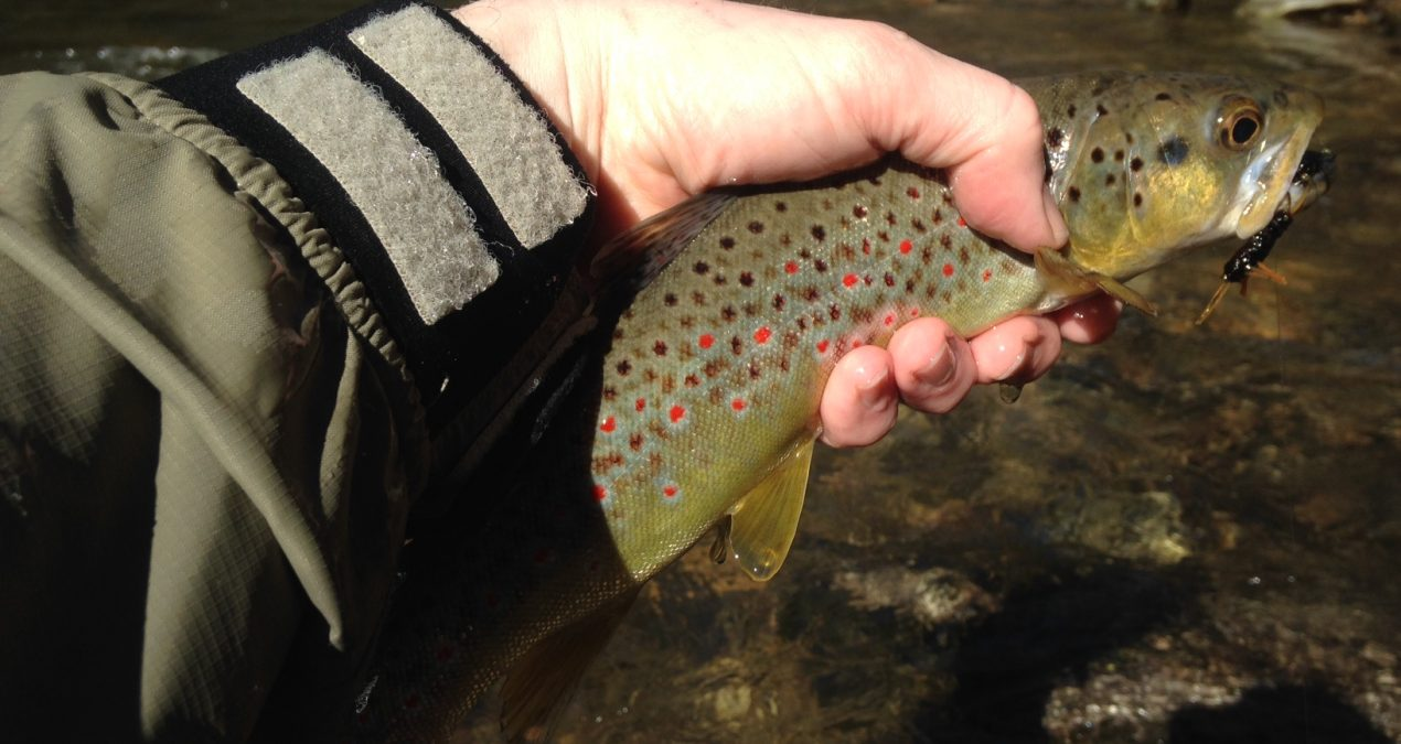 Georgia Fishing Report: January 29, 2016