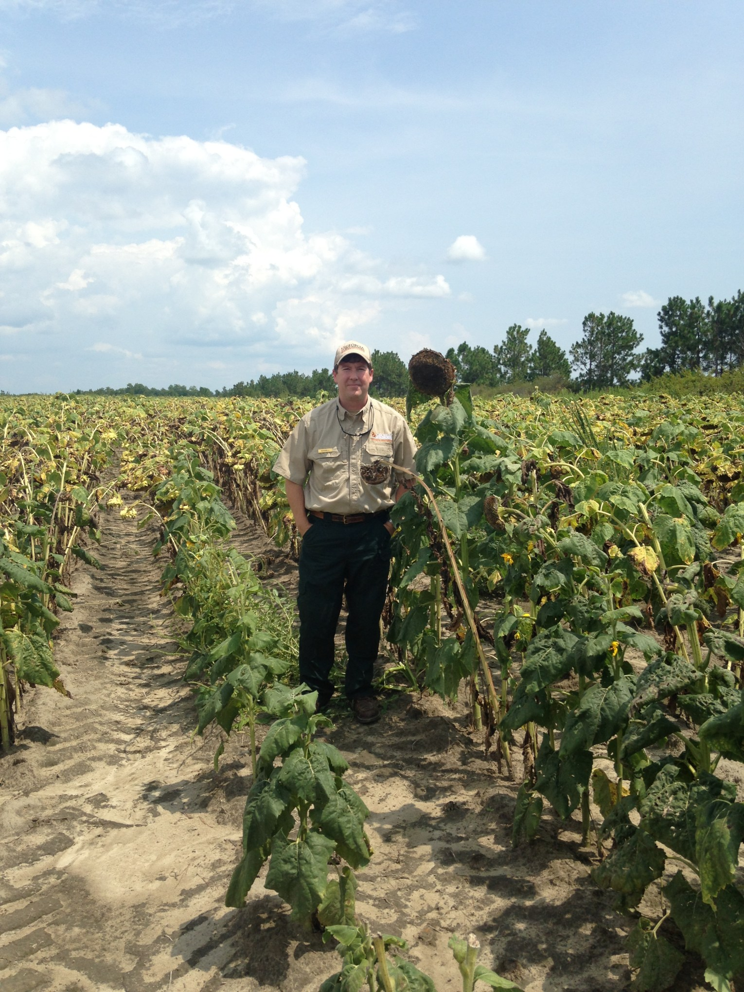 Di-Lane Adult Child Dove Field 072915 sunflowers 3.JPG