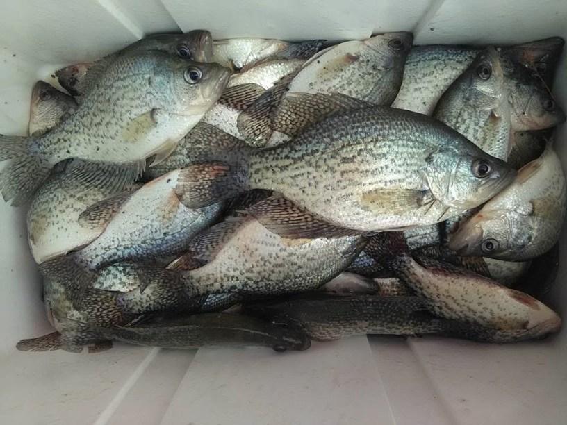 Georgia Fishing Report: February 3, 2017 | Georgia Wildlife Blog