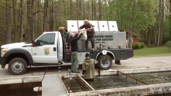 NE GA trout stocking loading Chatt truck at Buford2 Apr 2016
