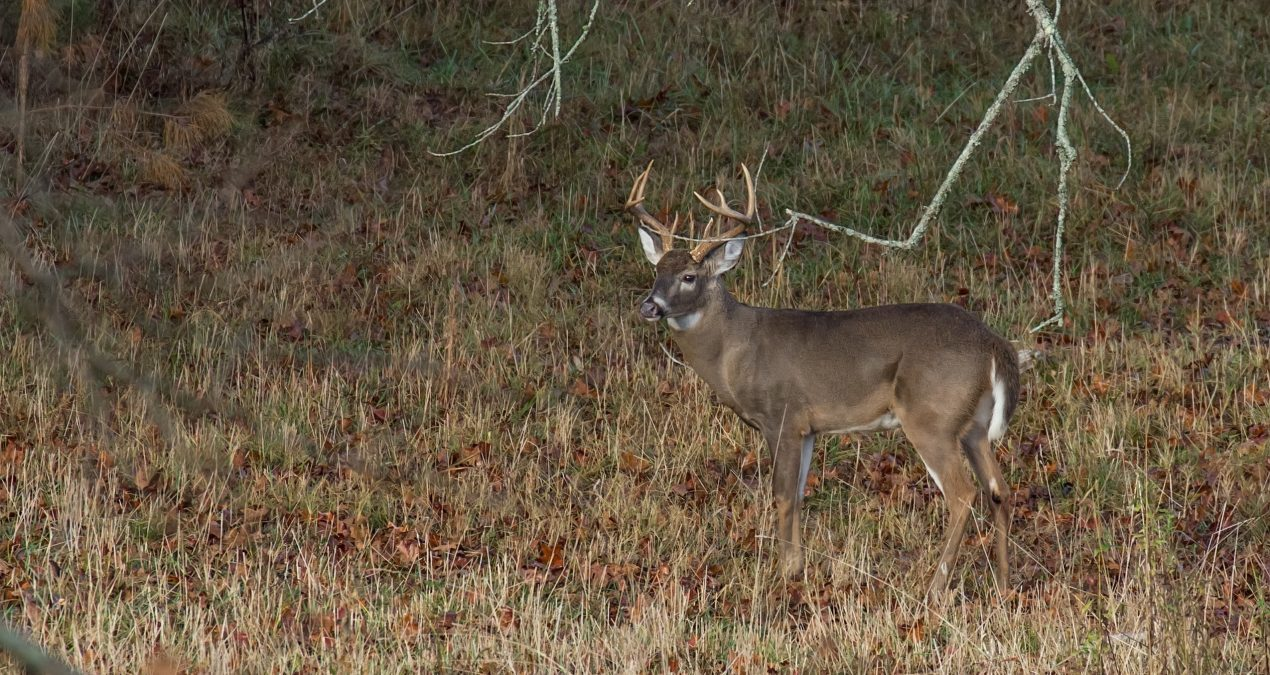 2017-2018 Hunting Regulations Major Changes