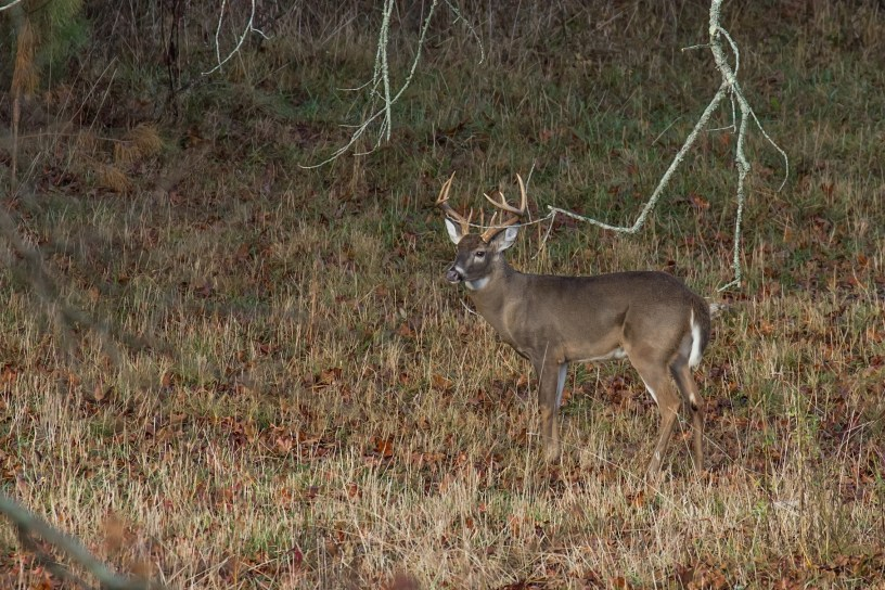 2017-2018 Hunting Regulations Major Changes | Georgia