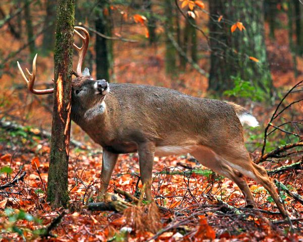 So you think you know how to deer hunt? 5 tips that will