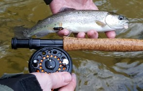 trout rbt Chattooga DH legs and eggs Nov 2015
