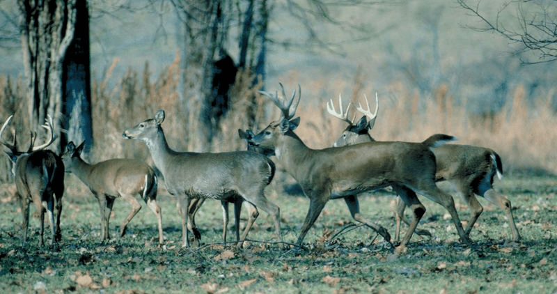 "CWD: Two States ""Away"" But Not Yet in Georgia"