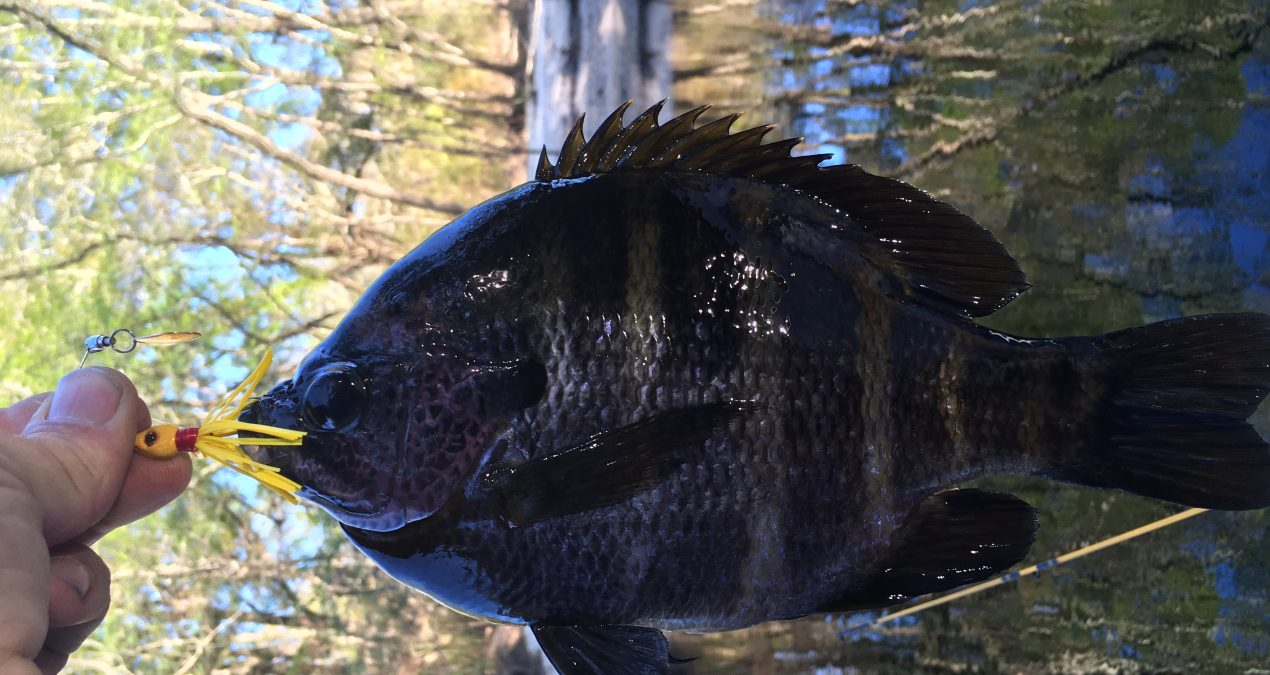 Georgia Fishing Report: March 9, 2018